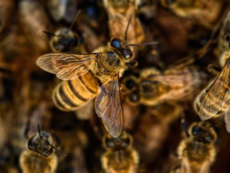 Crema viso Lunezia Cosmetics con veleno d'api